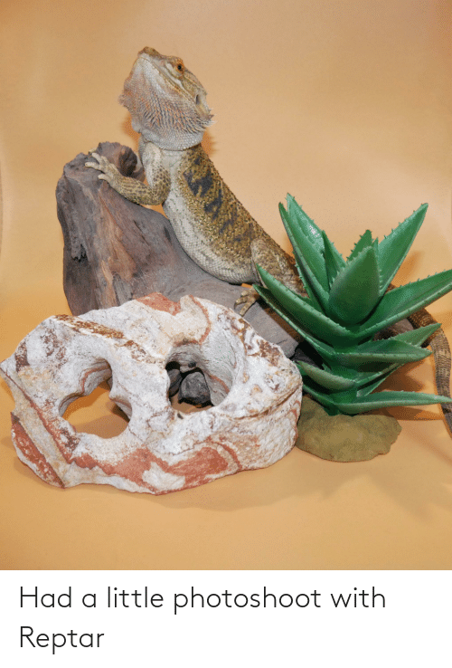 reptar: Had a little photoshoot with Reptar