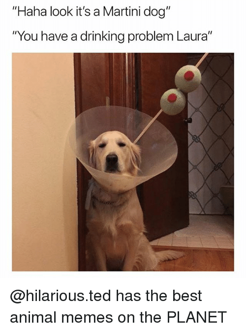 """Best Animal Memes: """"Haha look it's a Martini dog""""  """"You have a drinking problem Laura"""" @hilarious.ted has the best animal memes on the PLANET"""