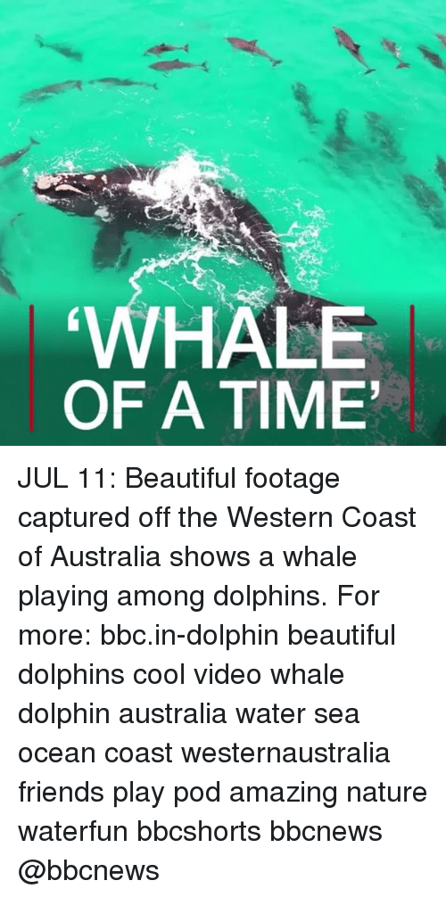 oceaneering: HALE  OF A TIME JUL 11: Beautiful footage captured off the Western Coast of Australia shows a whale playing among dolphins. For more: bbc.in-dolphin beautiful dolphins cool video whale dolphin australia water sea ocean coast westernaustralia friends play pod amazing nature waterfun bbcshorts bbcnews @bbcnews