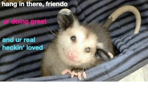 Hanging In There: hang in there, friendo  doing great  and ur real  heckin' loved