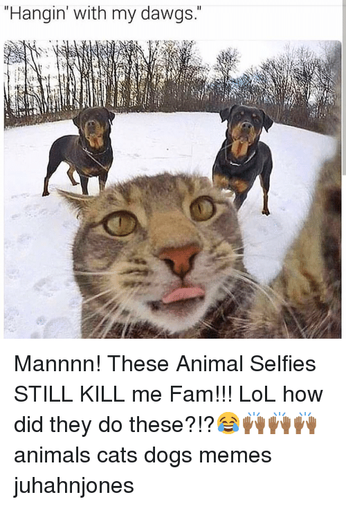 Animals, Cats, and Dogs: Hangin' with my dawgs. Mannnn! These Animal Selfies STILL KILL me Fam!!! LoL how did they do these?!?😂🙌🏾🙌🏾🙌🏾 animals cats dogs memes juhahnjones