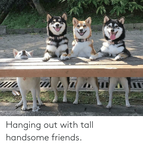 handsome: Hanging out with tall handsome friends.
