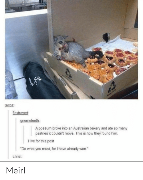 "Couldnt: HAOLIAY  SWOZ:  flextrovert  gnometeeth  A possum broke into an Australian bakery and ate so many  pastries it couldn't move. This is how they found him.  I live for this post  ""Do what you must, for I have already won.""  christ Meirl"