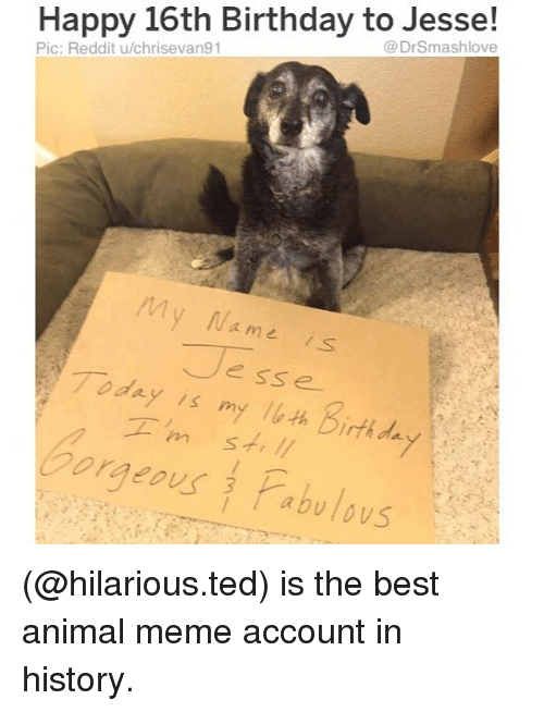 Animal Meme: Happy 16th Birthday to Jesse!  @DrSmashlove  Pic: Reddit u/chrisevan91  My Na me is  Jesse  Today is myルth birthda  Gorgeous Pabulous (@hilarious.ted) is the best animal meme account in history.