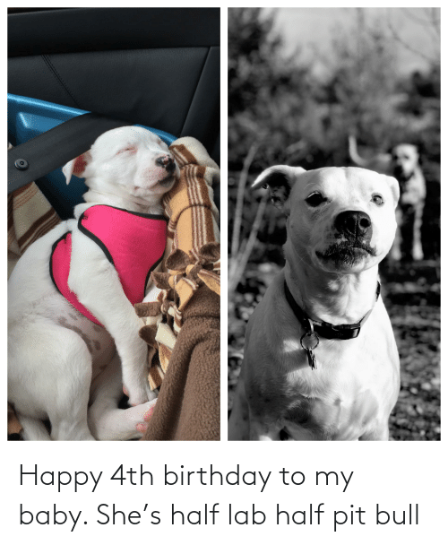 pit bull: Happy 4th birthday to my baby. She's half lab half pit bull