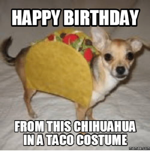 Chihuahua, Chihuahuas, and Taco-Meme: HAPPY BIRTHDAY  FROM THIS CHIHUAHUA  TACO  Memes