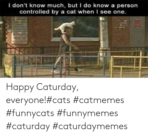funnymemes: Happy Caturday, everyone!#cats #catmemes #funnycats #funnymemes #caturday #caturdaymemes