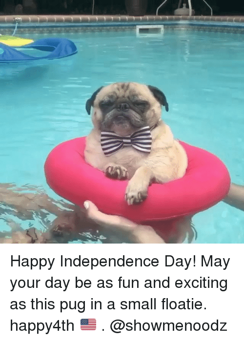Pugged: Happy Independence Day! May your day be as fun and exciting as this pug in a small floatie. happy4th 🇺🇸 . @showmenoodz