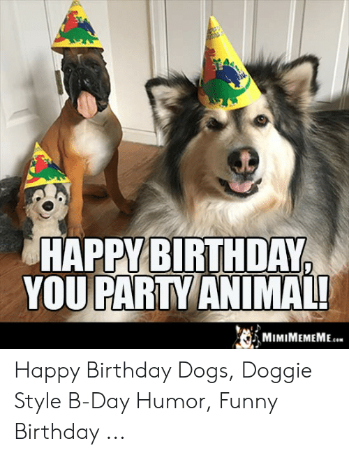 25 Best Memes About Happy Birthday Dogs Happy Birthday Dogs Memes