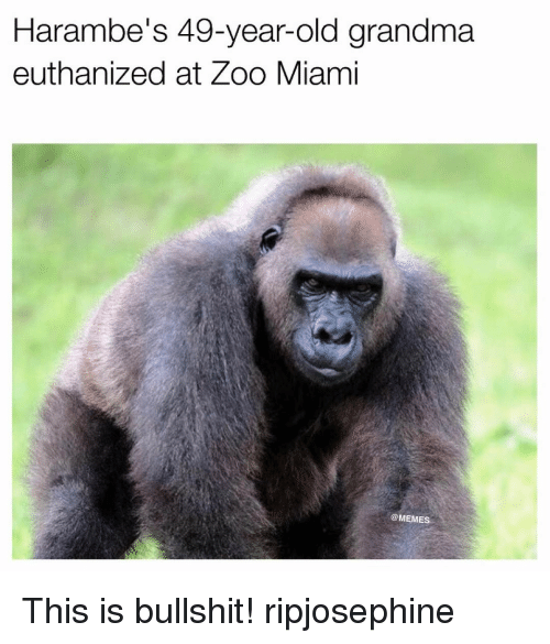 Harambism: Harambe's 49-year-old grandma  euthanized at Zoo Miami  COMEME This is bullshit! ripjosephine