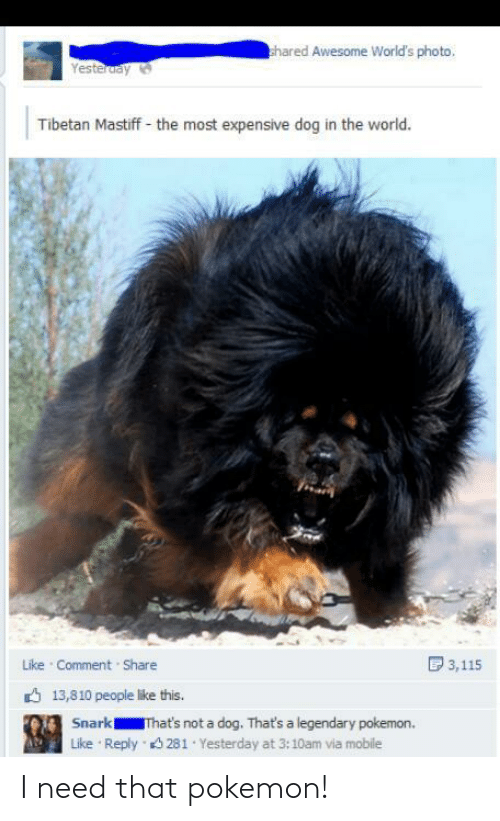 Worlds: hared Awesome World's photo,  Yesteruay  Tibetan Mastiff - the most expensive dog in the world.  D 3,115  Like Comment Share  6 13,810 people like this.  Snark  That's not a dog. That's a legendary pokemon.  Reply 3 281 Yesterday at 3:10am via mobile  Like I need that pokemon!