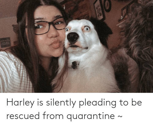 Harley: Harley is silently pleading to be rescued from quarantine ~