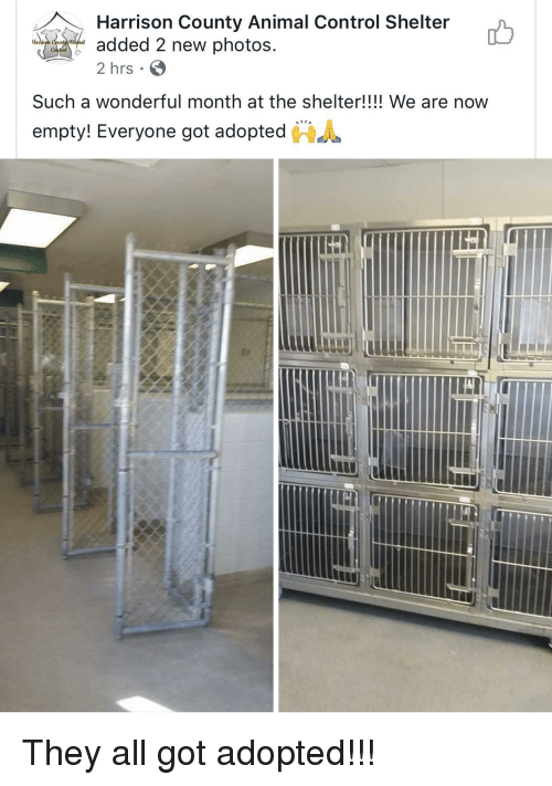 "Control, Animal, and Got: Harrison County Animal Control Shelter  added 2 new photos  2 hrs  Har  Such a wonderful month at the shelter!!!! We are now  ""  empty! Everyone got adopted  鲁 <p>They all got adopted!!!</p>"