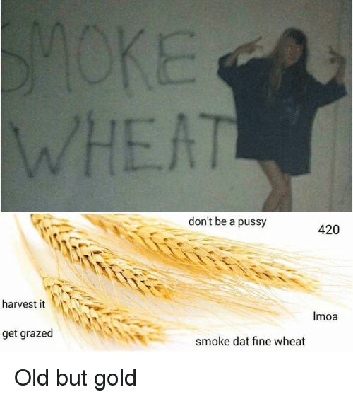 Grazing: harvest it  get grazed  don't be a pussy  420  Imoa  smoke dat fine wheat Old but gold