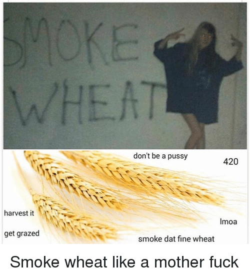 Grazing: harvest it  get grazed  don't be a pussy  420  Imoa  smoke dat fine wheat Smoke wheat like a mother fuck
