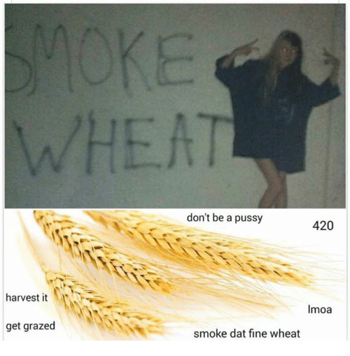 Dont Be A Pussy: harvest it  get grazed  don't be a pussy  420  Imoa  smoke dat fine wheat