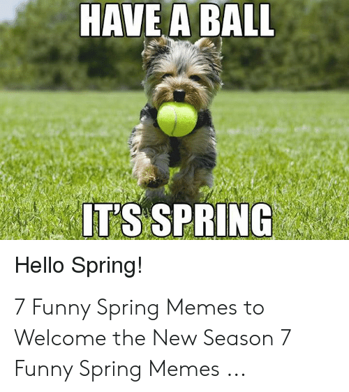 Funny Spring Memes: HAVE A BALL  T'S SPRING  Hello Spring! 7 Funny Spring Memes to Welcome the New Season 7 Funny Spring Memes ...