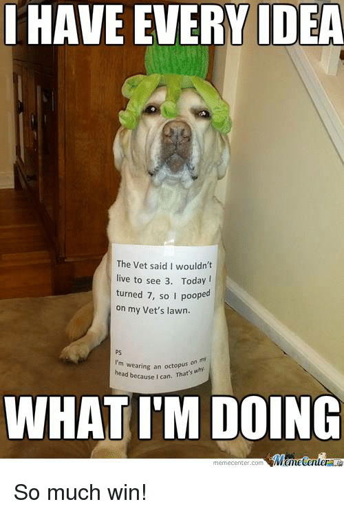 Memes, 🤖, and Idea: HAVE EVERY IDEA  The vet said I wouldn't  live to see 3. Today  turned 7, so I poope  on my Vet's lawn.  I'm wearing an head because I can. That's  why  WHAT IM DOING  Mane Center  meme Center.com So much win!