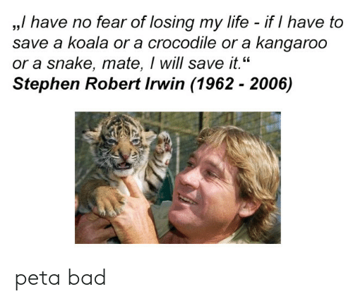 """Bad, Life, and Stephen: ,,/ have no fear of losing my life - if I have to  save a koala or a crocodile or a kangaroo  or a snake, mate, I will save it.""""  Stephen Robert Irwin (1962 - 2006)  35 peta bad"""