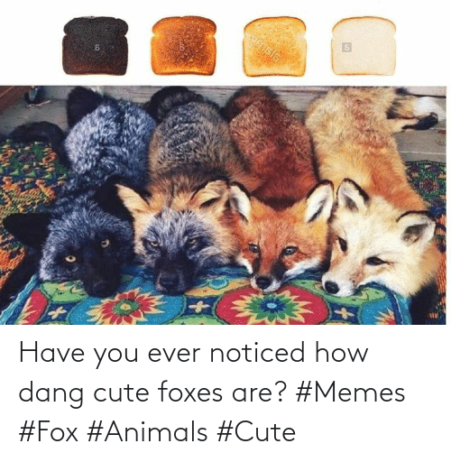 fox: Have you ever noticed how dang cute foxes are? #Memes #Fox #Animals #Cute
