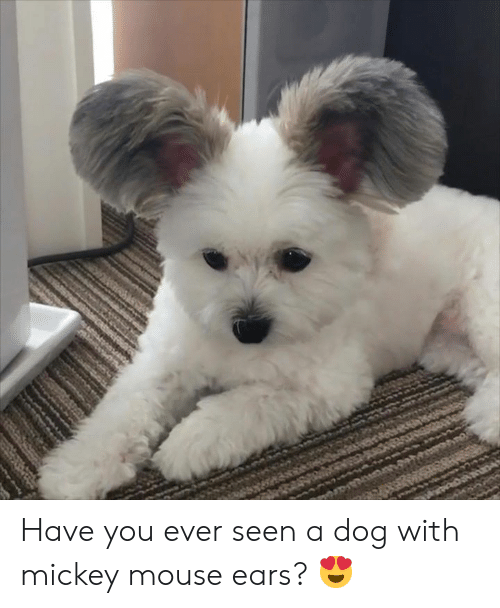 Mickey Mouse: Have you ever seen a dog with mickey mouse ears? 😍