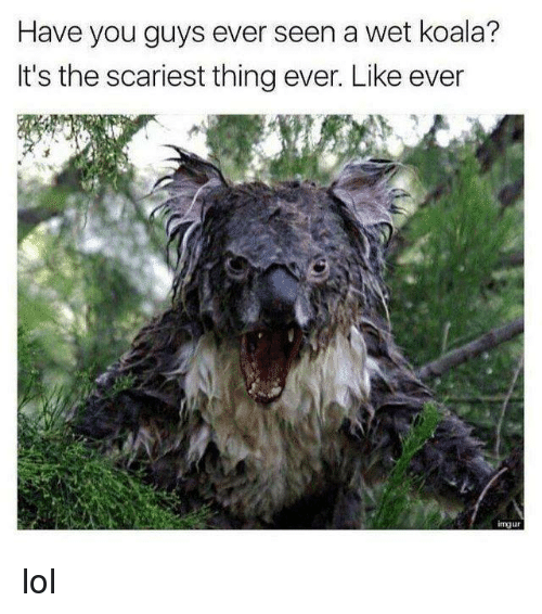 Dank, Lol, and 🤖: Have you guys ever seen a wet koala?  It's the scariest thing ever. Like ever  mju lol