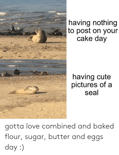 Baked, Cute, and Love: having nothing  to post on your  cake day  having cute  pictures of a  seal gotta love combined and baked flour, sugar, butter and eggs day :)