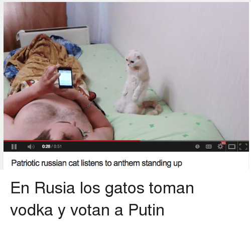 Putin, Vodka, and Russian: HD  II 0:28/0:51  Patriotic russian cat listens to anthem standing up <p>En Rusia los gatos toman vodka y votan a Putin</p>