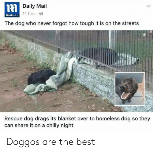 Streets: HDaily Mail  mail Crililne 11 hrs.  The dog who never forgot how tough it is on the streets  Rescue dog drags its blanket over to homeless dog so they  can share it on a chilly night Doggos are the best