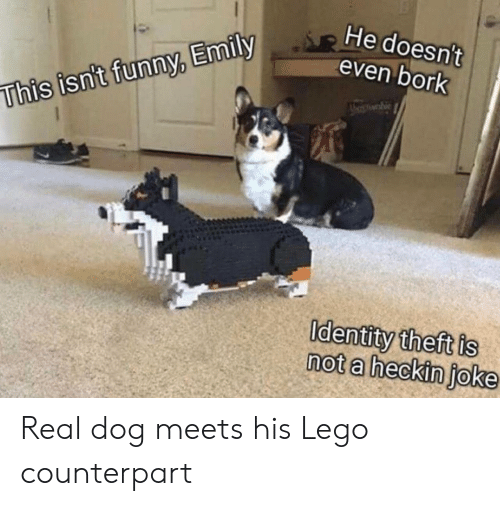 Heckin: He doesn't  even bork  whie  This isn't funny, Emily  Identity theft is  not a heckin joke Real dog meets his Lego counterpart