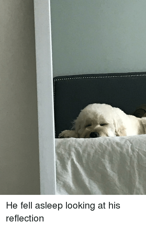 Looking, Reflection, and Asleep