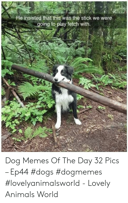 Animals, Dogs, and Memes: He insisted that this was the stick we were  going to play fetch with. Dog Memes Of The Day 32 Pics – Ep44 #dogs #dogmemes #lovelyanimalsworld - Lovely Animals World