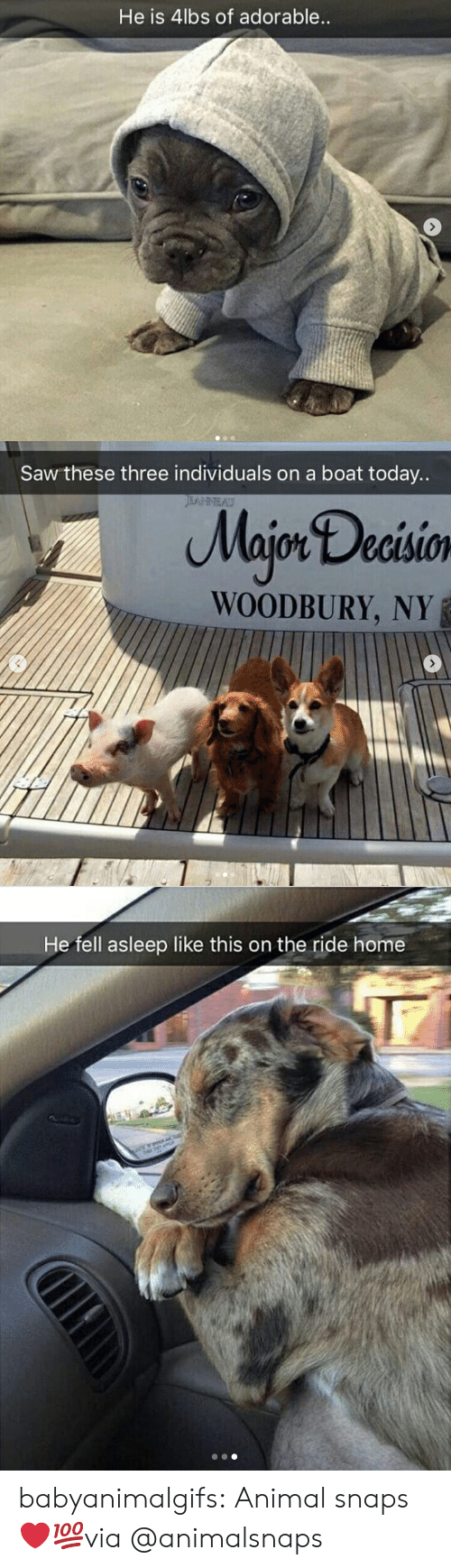 Boat: He is 4lbs of adorable   Saw these three individuals on a boat today..  Majon Decisio  WOODBURY, NY   He fell asleep like this on the ride home babyanimalgifs:  Animal snaps ❤💯via @animalsnaps
