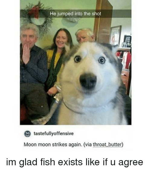 moon moon: He jumped into the shot  tastefully offensive  Moon moon strikes again. (via throat butter0 im glad fish exists like if u agree