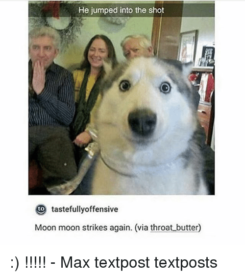 moon moon: He jumped into the shot  to  tastefullyoffensive  Moon moon strikes again. (via throat butter :) !!!!! - Max textpost textposts