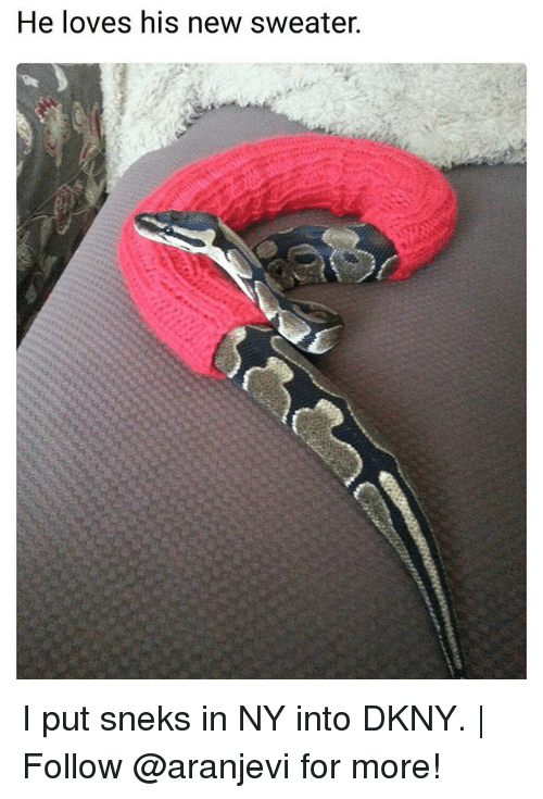 I Putted: He loves his new sweater. I put sneks in NY into DKNY.   Follow @aranjevi for more!