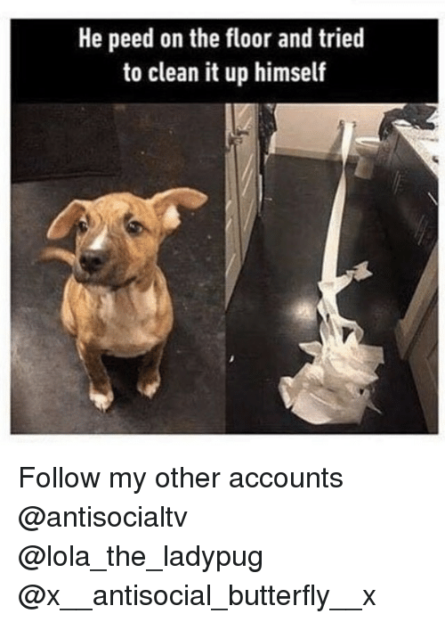 floored: He peed on the floor and tried  to clean it up himself Follow my other accounts @antisocialtv @lola_the_ladypug @x__antisocial_butterfly__x