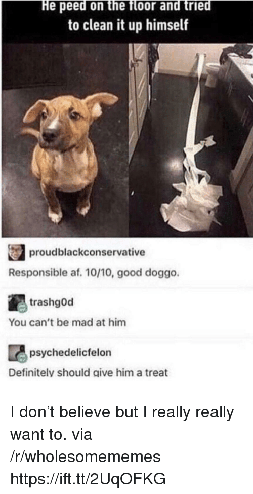 Af, Definitely, and Good: He peed on the floor and tried  to clean it up himself  proudblackconservative  Responsible af. 10/10, good doggo  trashgOd  You can't be mad at him  psychedelicfelon  Definitely should give him a treat I don't believe but I really really want to. via /r/wholesomememes https://ift.tt/2UqOFKG