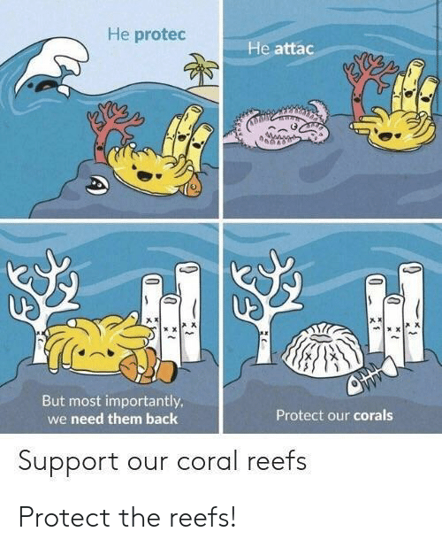 He Attac: He protec  He attac  产ㅈ  声ㄨ  But most importantly  we need them back  Protect our corals  Support our coral reefs Protect the reefs!