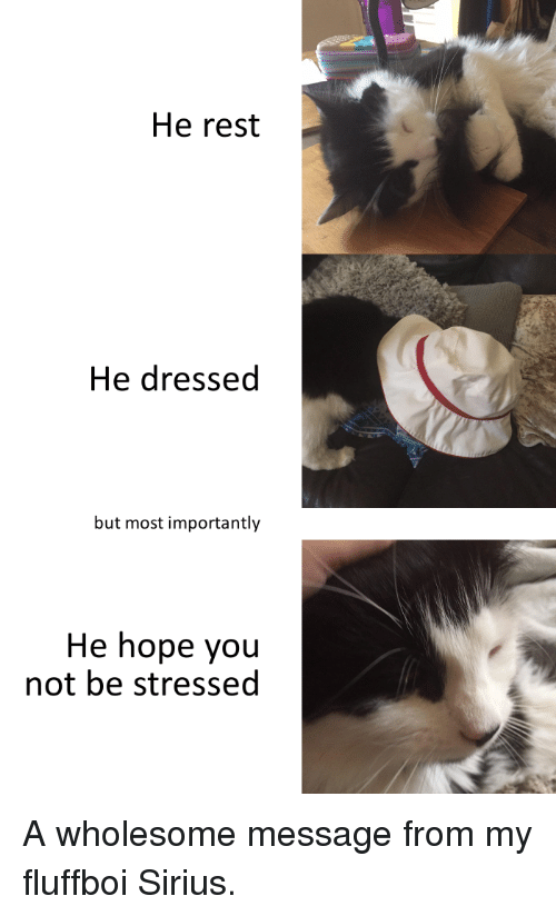 Sirius: He rest  He dressed  but most importantly  He hope you  not be stressed A wholesome message from my fluffboi Sirius.