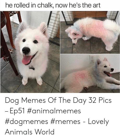 Animals, Memes, and World: he rolled in chalk, now he's the art Dog Memes Of The Day 32 Pics – Ep51 #animalmemes #dogmemes #memes - Lovely Animals World