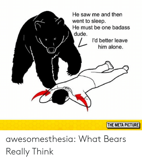 Being Alone, Dude, and Saw: He saw me and then  went to sleep  He must be one badass  dude  I'd better leave  him alone  THE META PICTURE awesomesthesia:  What Bears Really Think