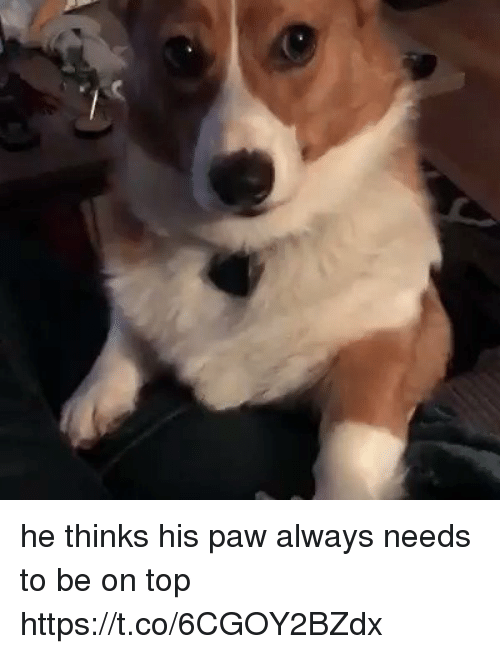 pawe: he thinks his paw always needs to be on top https://t.co/6CGOY2BZdx