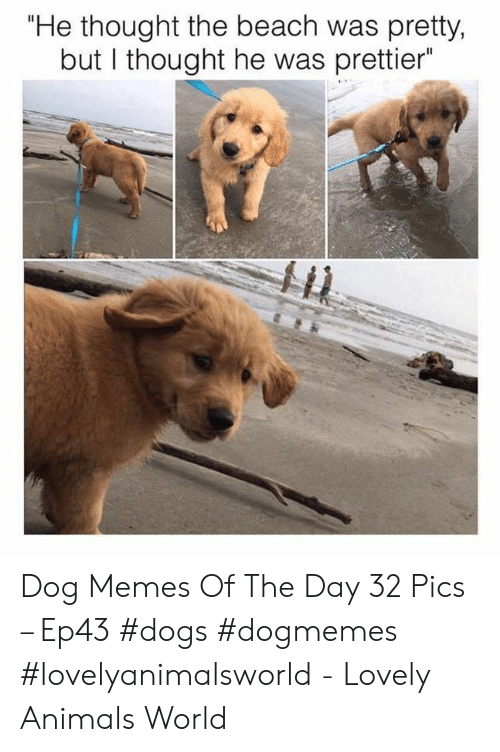 "Prettier: ""He thought the beach was pretty,  but I thought he was prettier Dog Memes Of The Day 32 Pics – Ep43 #dogs #dogmemes #lovelyanimalsworld - Lovely Animals World"
