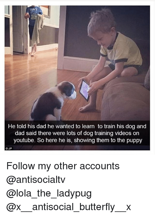 lolas: He told his dad he wanted to learn to train his dog and  dad said there were lots of dog training videos orn  youtube. So here he is, showing them to the puppy Follow my other accounts @antisocialtv @lola_the_ladypug @x__antisocial_butterfly__x