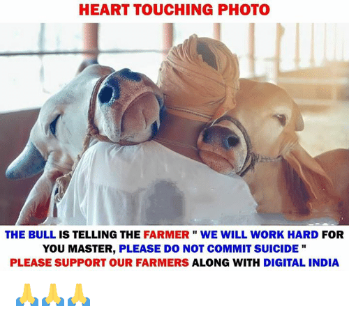 """Memes, Work, and Heart: HEART TOUCHING PHOTO  THE BULL IS TELLING THE FARMER"""" WE WILL WORK HARD FOR  YOU MASTER, PLEASE DO NOT COMMIT SUICIDE """"  PLEASE SUPPORT OUR FARMERS ALONG WITH DIGITAL INDIA 🙏🙏🙏"""