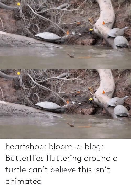 believe: heartshop: bloom-a-blog: Butterflies fluttering around a turtle can't believe this isn't animated