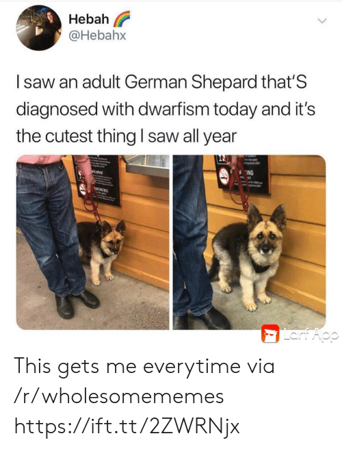 german shepard: Hebah  @Hebahx  Isaw an adult German Shepard that'S  diagnosed with dwarfism today and it's  the cutest thing l saw all year  ING  alcohol  SMOKING  Lart Aop This gets me everytime via /r/wholesomememes https://ift.tt/2ZWRNjx