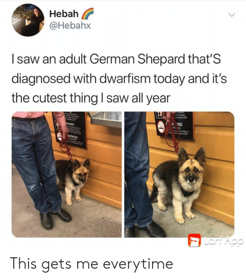 german shepard: Hebah  @Hebahx  Isaw an adult German Shepard that'S  diagnosed with dwarfism today and it's  the cutest thing l saw all year  ING  alcohol  SMOKING  Lart Aop This gets me everytime