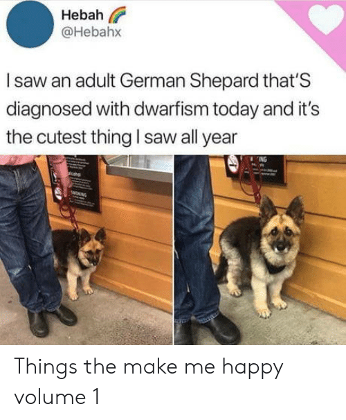 Saw, Happy, and Today: Hebah  @Hebahx  Isaw an adult German Shepard that'S  diagnosed with dwarfism today and it's  the cutest thing l saw all year  ING  wOUNG Things the make me happy volume 1
